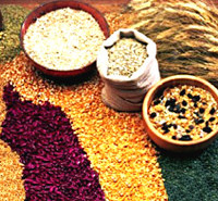 Agriculture in Mughal Period